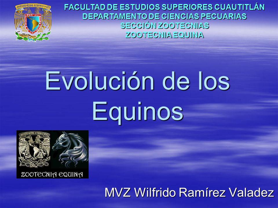 Evolución de los Equinos MVZ Wilfrido Ramírez Valadez FACULTAD DE ESTUDIOS SUPERIORES CUAUTITLÁN DEPARTAMENTO DE CIENCIAS PECUARIAS SECCIÓN ZOOTECNIAS