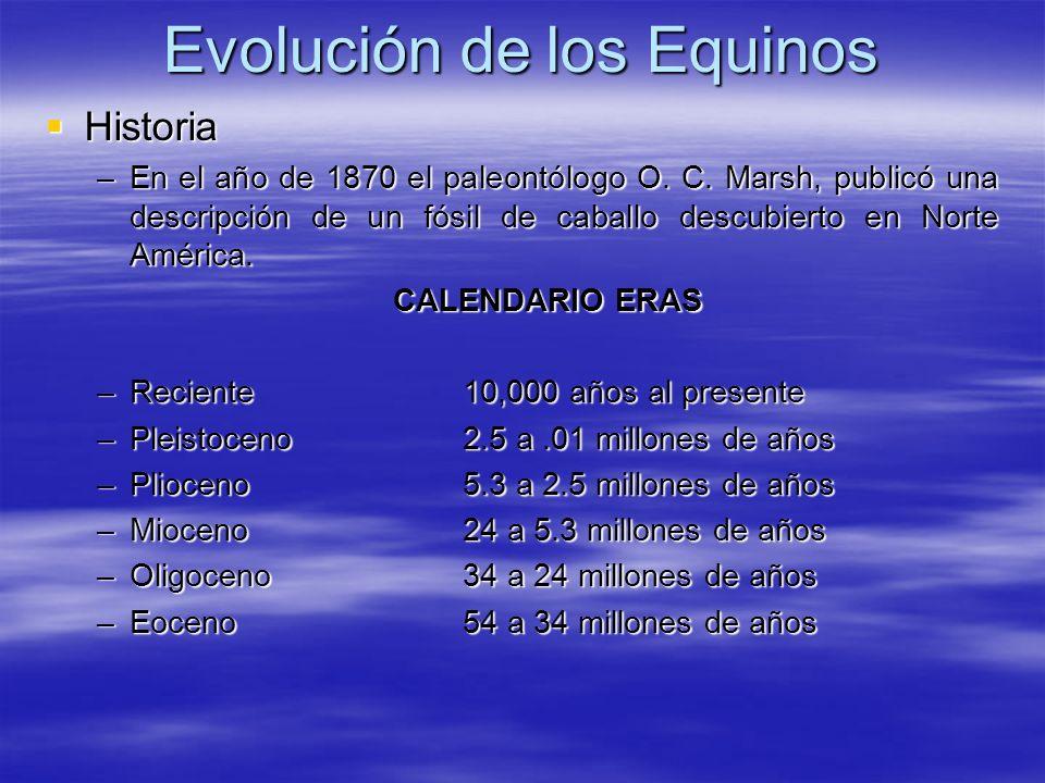 Evolución de los Equinos Historia Historia –En el año de 1870 el paleontólogo O. C. Marsh, publicó una descripción de un fósil de caballo descubierto