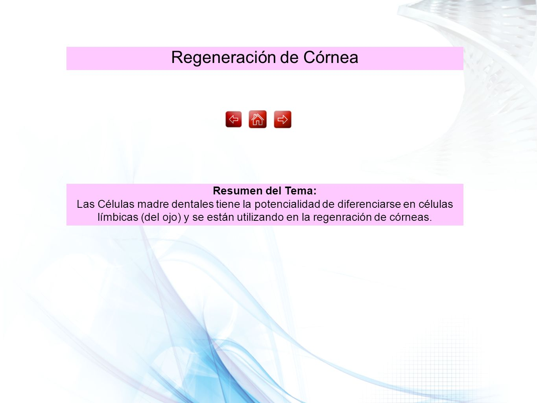 Regeneración de Córnea Resumen del Tema: Las Células madre dentales tiene la potencialidad de diferenciarse en células límbicas (del ojo) y se están u