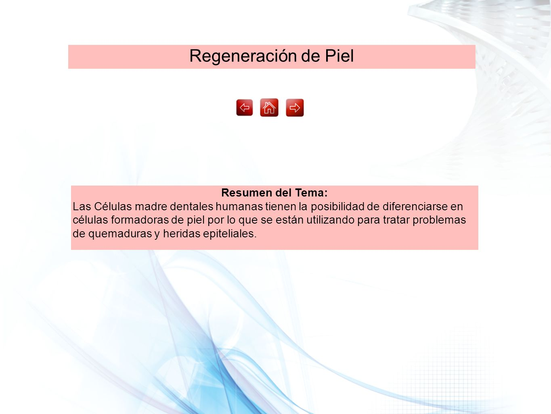Regeneración de Piel Resumen del Tema: Las Células madre dentales humanas tienen la posibilidad de diferenciarse en células formadoras de piel por lo