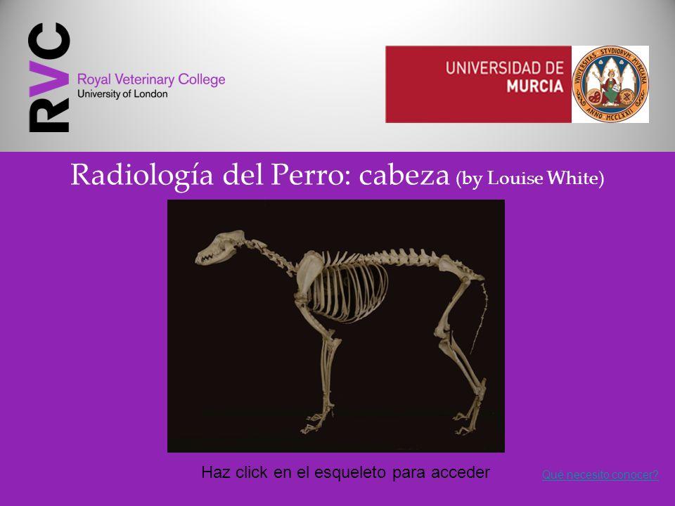 Radiología del Perro: cabeza (by Louise White) Haz click en el esqueleto para acceder Qué necesito conocer?