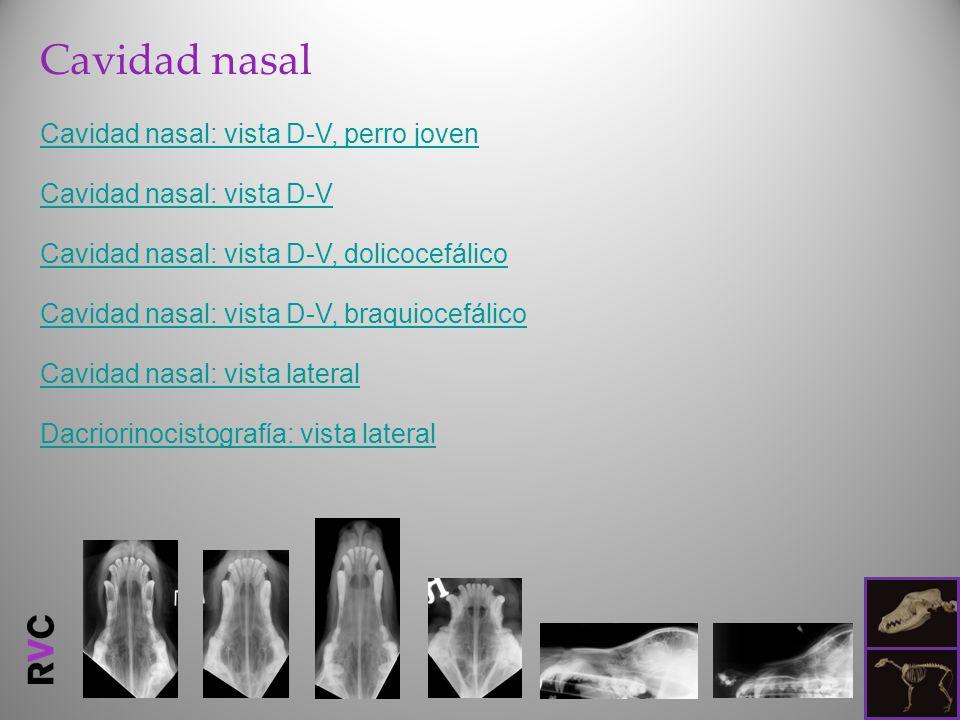 Cavidad nasal Cavidad nasal: vista D-V, perro joven Cavidad nasal: vista D-V Cavidad nasal: vista D-V, dolicocefálico Cavidad nasal: vista D-V, braquiocefálico Cavidad nasal: vista lateral Dacriorinocistografía: vista lateral