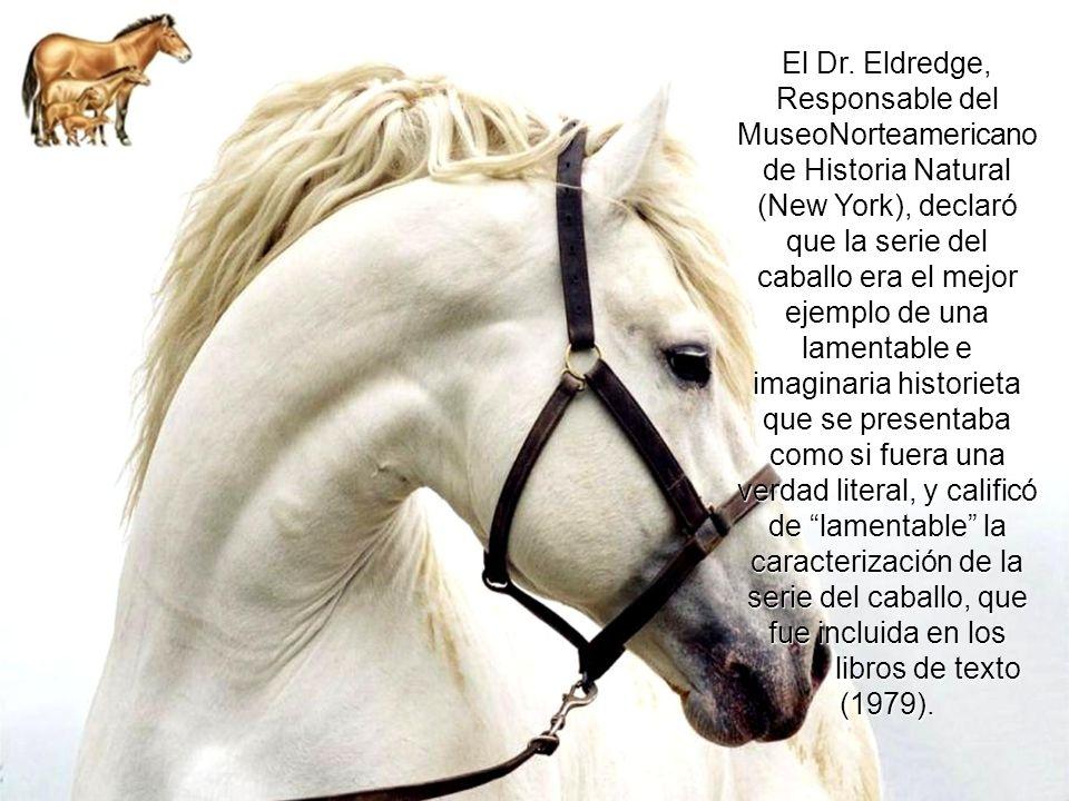 El Eohippus, supuestamente el fósil del caballo más primitivo, y extinto desde hace siglos; es posible que en realidad siga vivo y sano, pero sin pare
