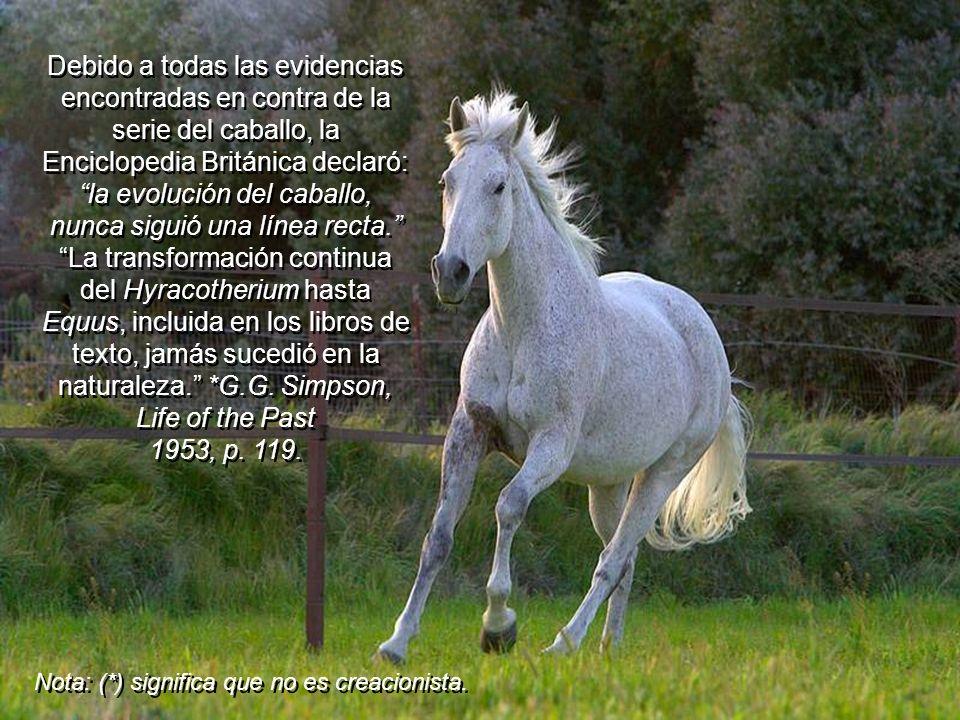 El Dr. Eldredge, Responsable del MuseoNorteamericano de Historia Natural (New York), declaró que la serie del caballo era el mejor ejemplo de una lame