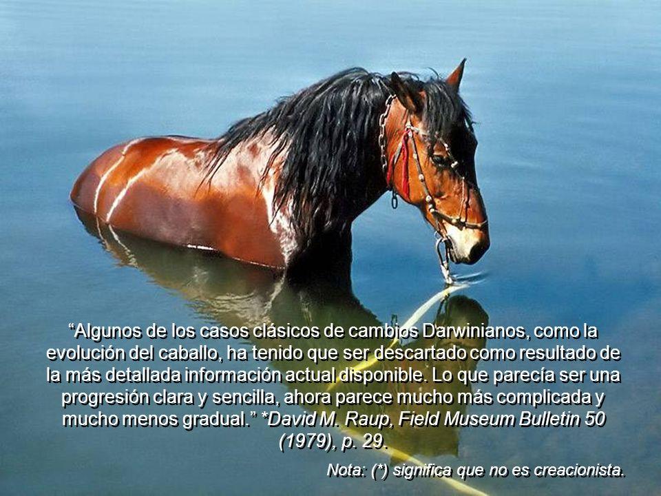 Debido a todas las evidencias encontradas en contra de la serie del caballo, la Enciclopedia Británica declaró: la evolución del caballo, nunca siguió