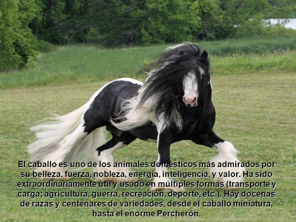 Dijo Dios: ¿Diste tú al caballo su fuerza.¿Vestiste tú su cuello de crines.