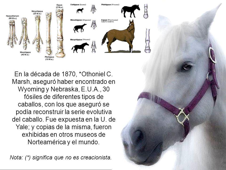 El Eohippus, supuestamente el fósil del caballo más primitivo, y extinto desde hace siglos; es posible que en realidad siga vivo y sano, pero sin parentesco alguno con el caballo, ya que es una criatura tímida, del tamaño de un zorro, y que merodea entre los matorrales de África.