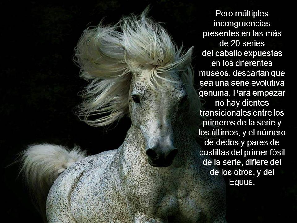 El desarrollo de los caballos es supuestamente, uno de los ejemplos de evolución más concretos. Los cambios en el tamaño, tipo de dientes, la forma de