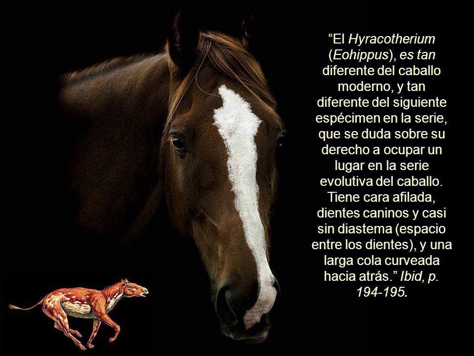 El Hyracotherium (Eohippus), es tan diferente del caballo moderno, y tan diferente del siguiente espécimen en la serie, que se duda sobre su derecho a ocupar un lugar en la serie evolutiva del caballo.
