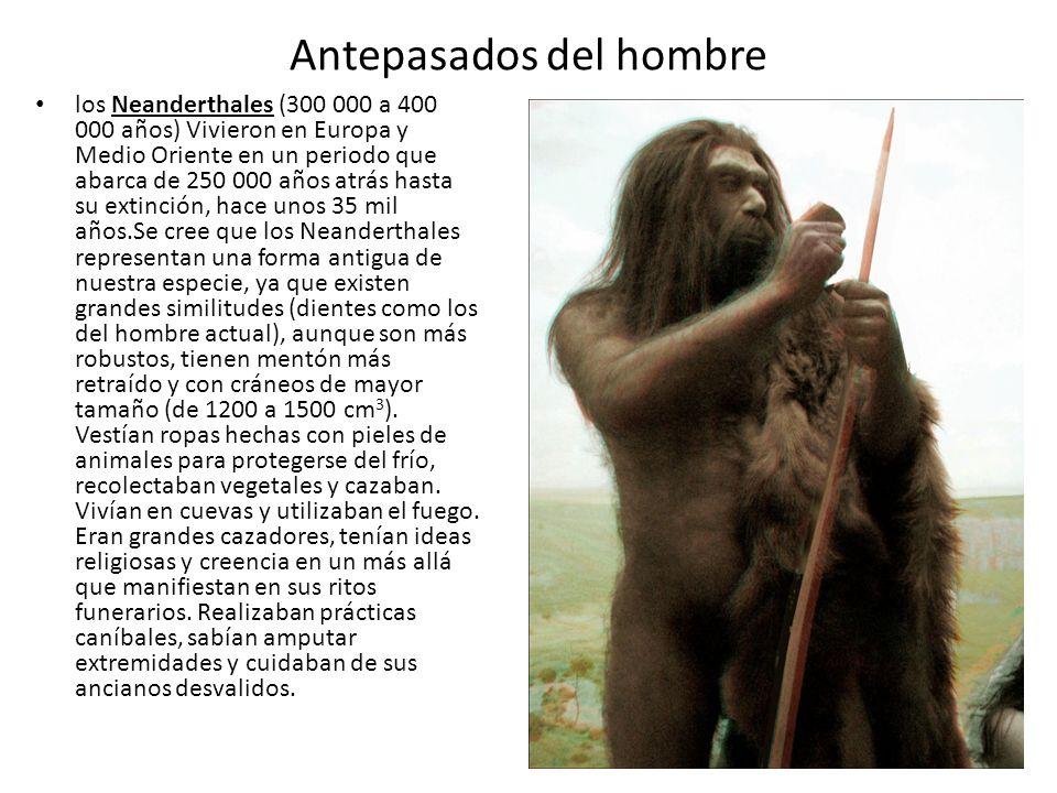 Antepasados del hombre los Neanderthales (300 000 a 400 000 años) Vivieron en Europa y Medio Oriente en un periodo que abarca de 250 000 años atrás ha