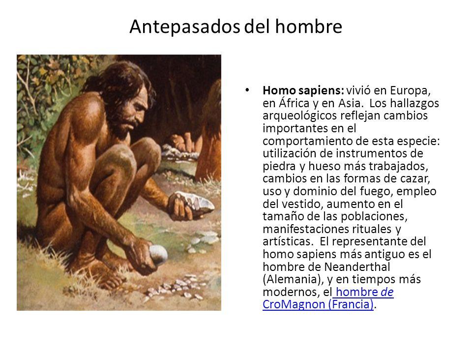Antepasados del hombre Homo sapiens: vivió en Europa, en África y en Asia. Los hallazgos arqueológicos reflejan cambios importantes en el comportamien