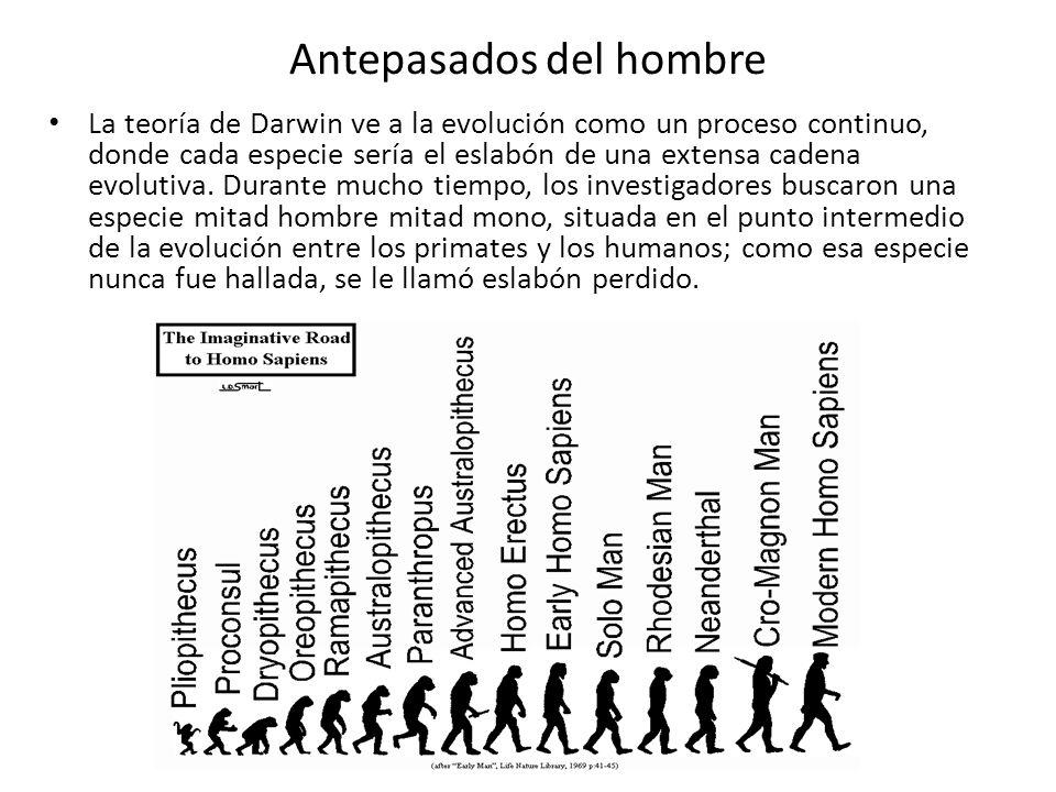 Antepasados del hombre La teoría de Darwin ve a la evolución como un proceso continuo, donde cada especie sería el eslabón de una extensa cadena evolu