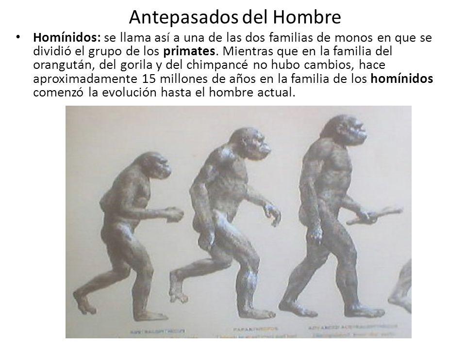Antepasados del Hombre Homínidos: se llama así a una de las dos familias de monos en que se dividió el grupo de los primates. Mientras que en la famil