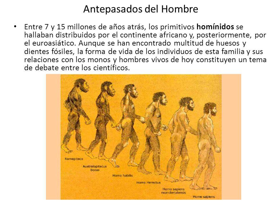 Antepasados del Hombre Entre 7 y 15 millones de años atrás, los primitivos homínidos se hallaban distribuidos por el continente africano y, posteriorm