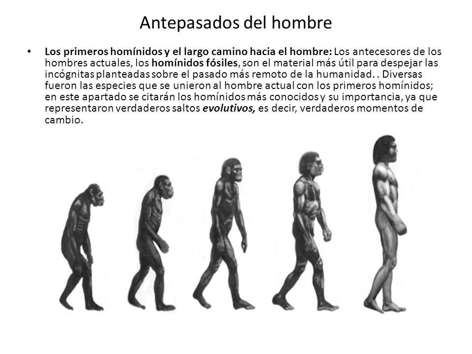 Antepasados del hombre Los primeros homínidos y el largo camino hacia el hombre: Los antecesores de los hombres actuales, los homínidos fósiles, son e