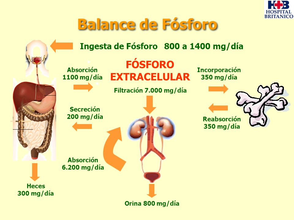Balance de Fósforo Heces 300 mg/día FÓSFORO EXTRACELULAR Filtración 7.000 mg/día Ingesta de Fósforo 800 a 1400 mg/día Secreción 200 mg/día Absorción 1