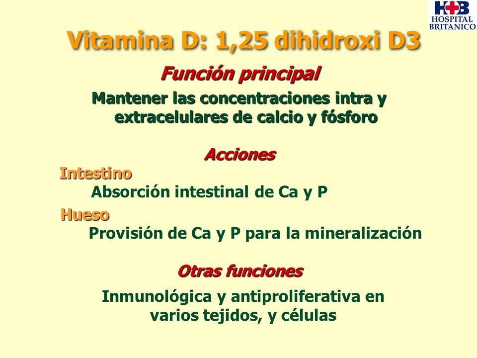 Función principal Mantener las concentraciones intra y extracelulares de calcio y fósforo Mantener las concentraciones intra y extracelulares de calci