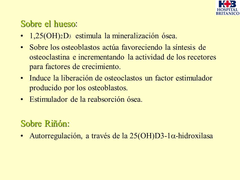 Sobre el hueso Sobre el hueso: 1,25(OH) 2 D 3 estimula la mineralización ósea. Sobre los osteoblastos actúa favoreciendo la síntesis de osteoclastina