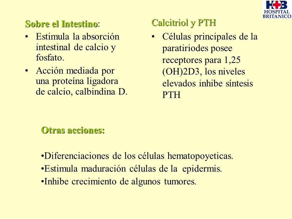 Sobre el Intestino Sobre el Intestino: Estimula la absorción intestinal de calcio y fosfato. Acción mediada por una proteína ligadora de calcio, calbi