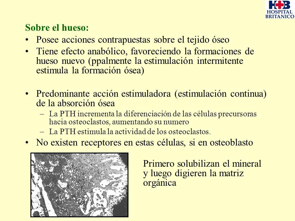 Sobre el hueso: Posee acciones contrapuestas sobre el tejido óseo Tiene efecto anabólico, favoreciendo la formaciones de hueso nuevo (ppalmente la est
