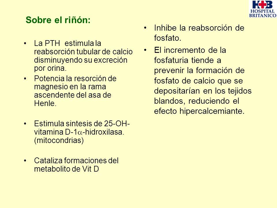Sobre el riñón: La PTH estimula la reabsorción tubular de calcio disminuyendo su excreción por orina. Potencia la resorción de magnesio en la rama asc