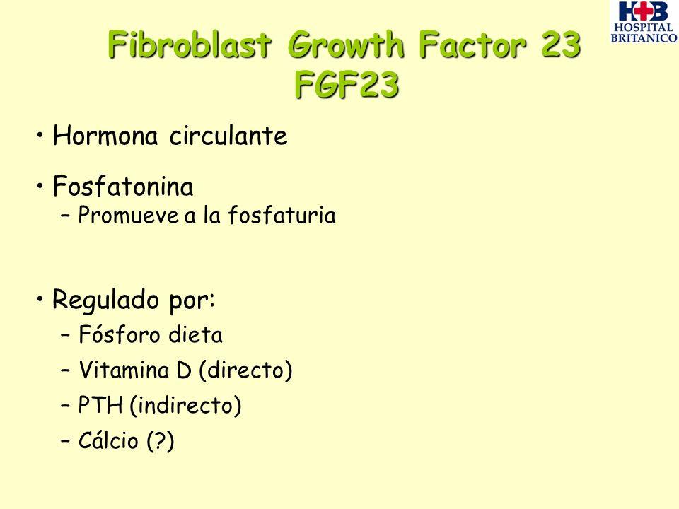 Fibroblast Growth Factor 23 FGF23 Hormona circulante Fosfatonina –Promueve a la fosfaturia Regulado por: –Fósforo dieta –Vitamina D (directo) –PTH (in