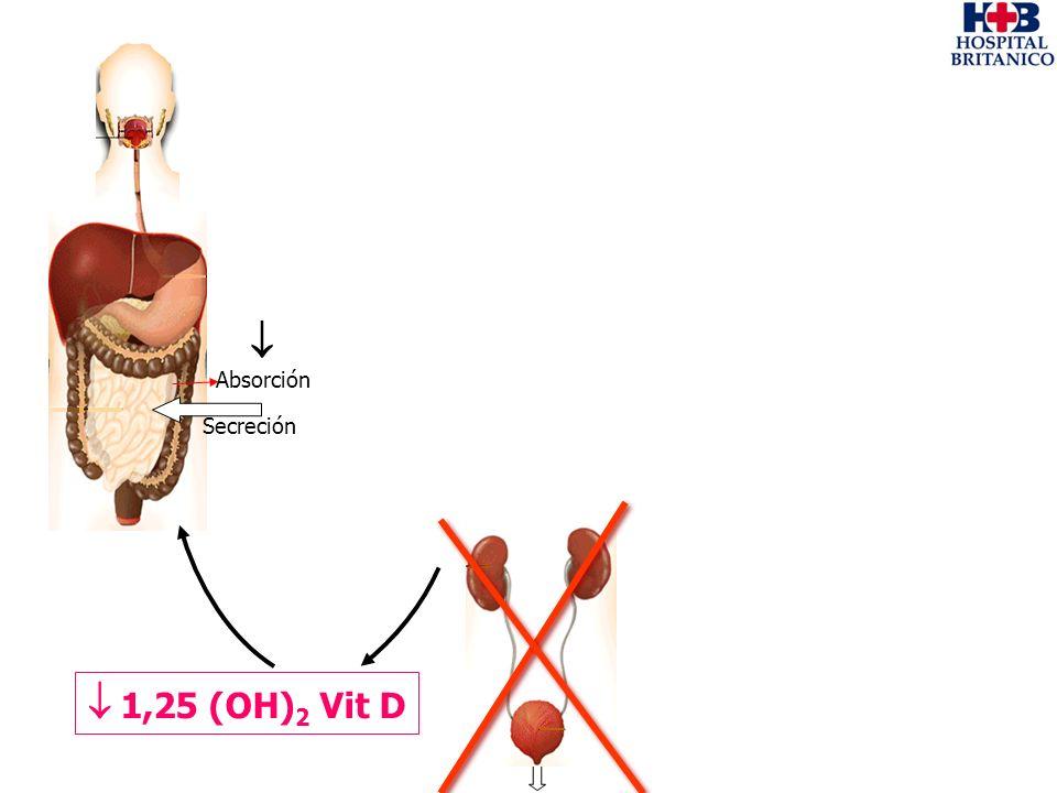 Absorción Secreción 1,25 (OH) 2 Vit D