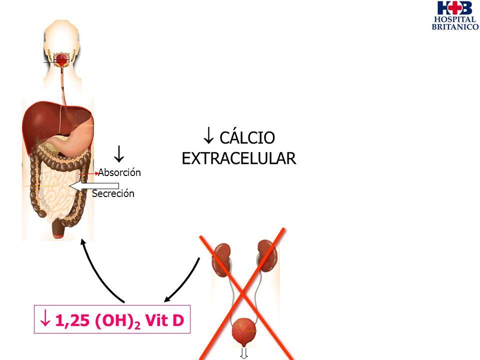 Absorción Secreción 1,25 (OH) 2 Vit D CÁLCIO EXTRACELULAR