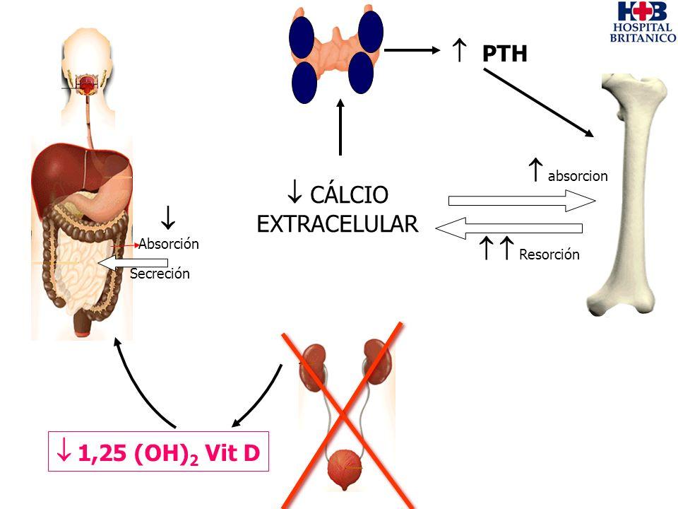 Absorción Secreción PTH Resorción 1,25 (OH) 2 Vit D absorcion CÁLCIO EXTRACELULAR