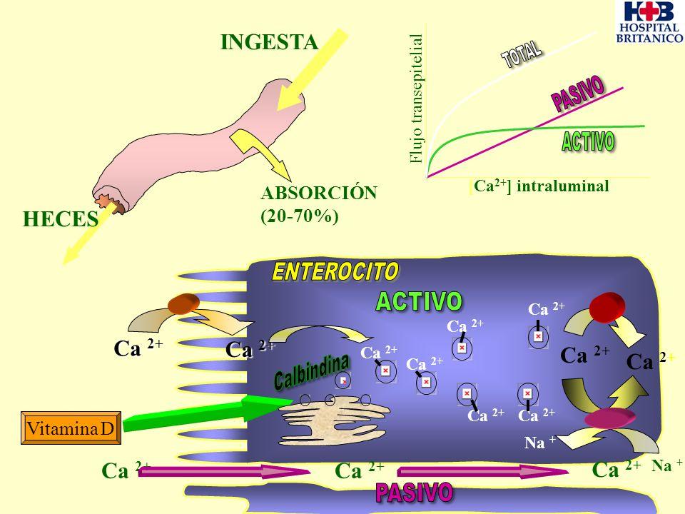 [Ca 2+ ] intraluminal Flujo transepitelial Ca 2 Ca 2+ Ca 2+ Vitamina D Ca 2+ ABSORCIÓN (20-70%) Ca 2+ INGESTA HECES Ca 2+ Na +