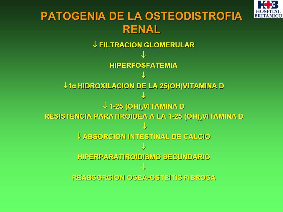 PATOGENIA DE LA OSTEODISTROFIA RENAL FILTRACION GLOMERULAR FILTRACION GLOMERULARHIPERFOSFATEMIA 1α HIDROXILACION DE LA 25(OH)VITAMINA D 1α HIDROXILACI