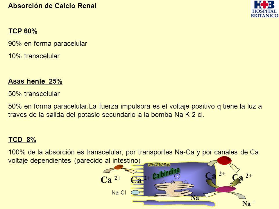 Absorción de Calcio Renal TCP 60% 90% en forma paracelular 10% transcelular Asas henle 25% 50% transcelular 50% en forma paracelular.La fuerza impulso