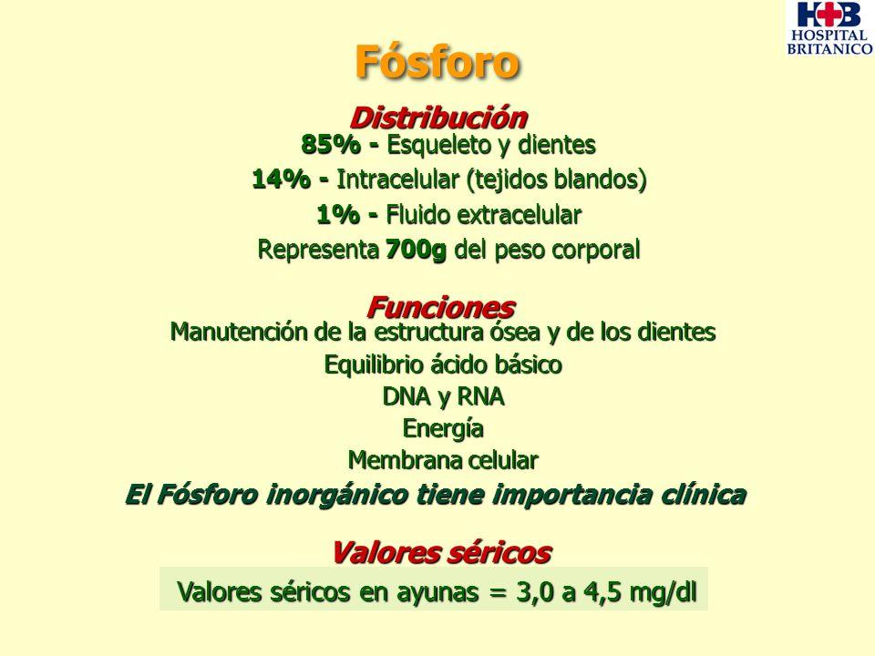 Marrow Osteocytes TRABECULAR BONE Osteocyte network Osteoclast