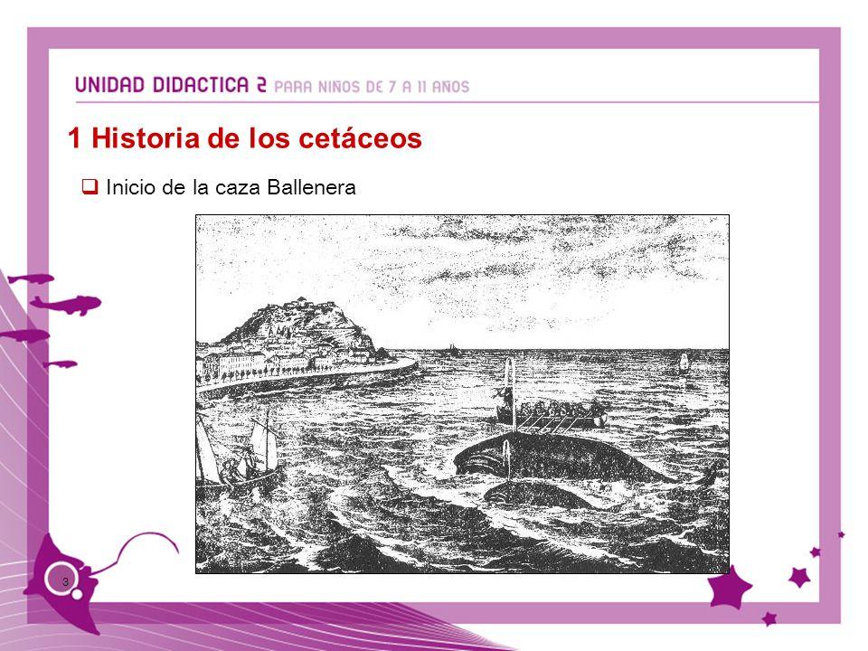 3 Inicio de la caza Ballenera 1 Historia de los cetáceos