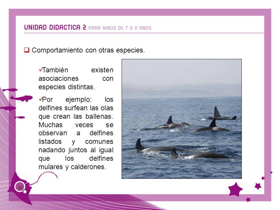 32 Comportamiento con otras especies. También existen asociaciones con especies distintas. Por ejemplo: los delfines surfean las olas que crean las ba