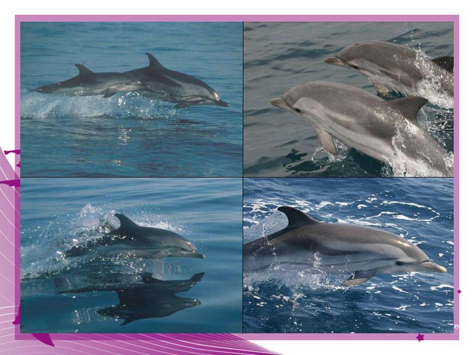39 © CIRCE Conservación Información y Estudio de Cetáceos