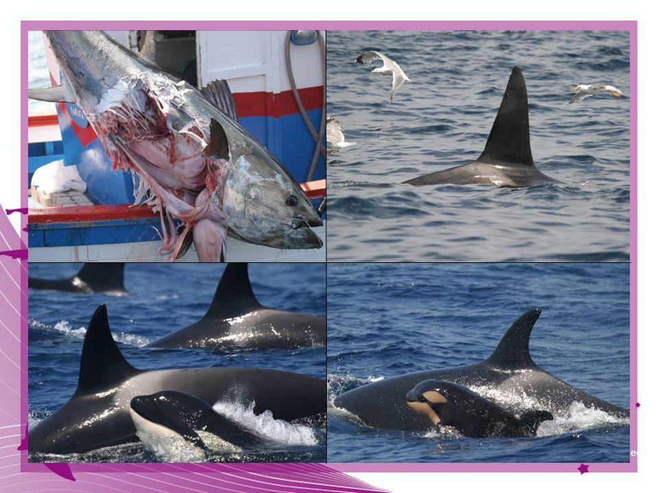 47 © CIRCE Conservación Información y Estudio de Cetáceos