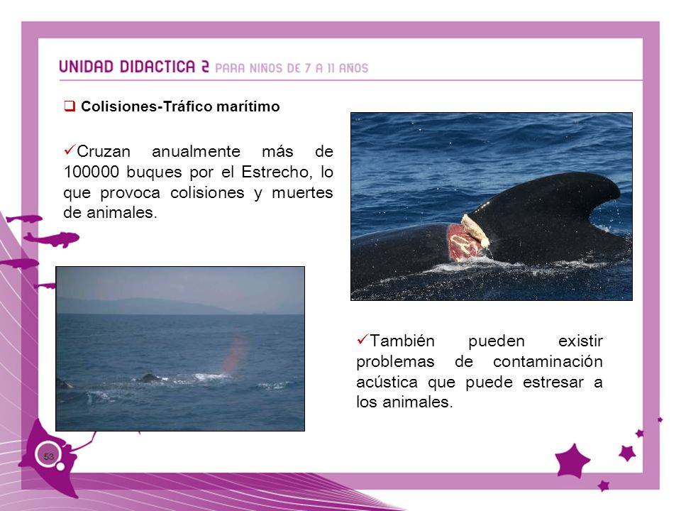 53 Colisiones-Tráfico marítimo Cruzan anualmente m á s de 100000 buques por el Estrecho, lo que provoca colisiones y muertes de animales. Tambi é n pu