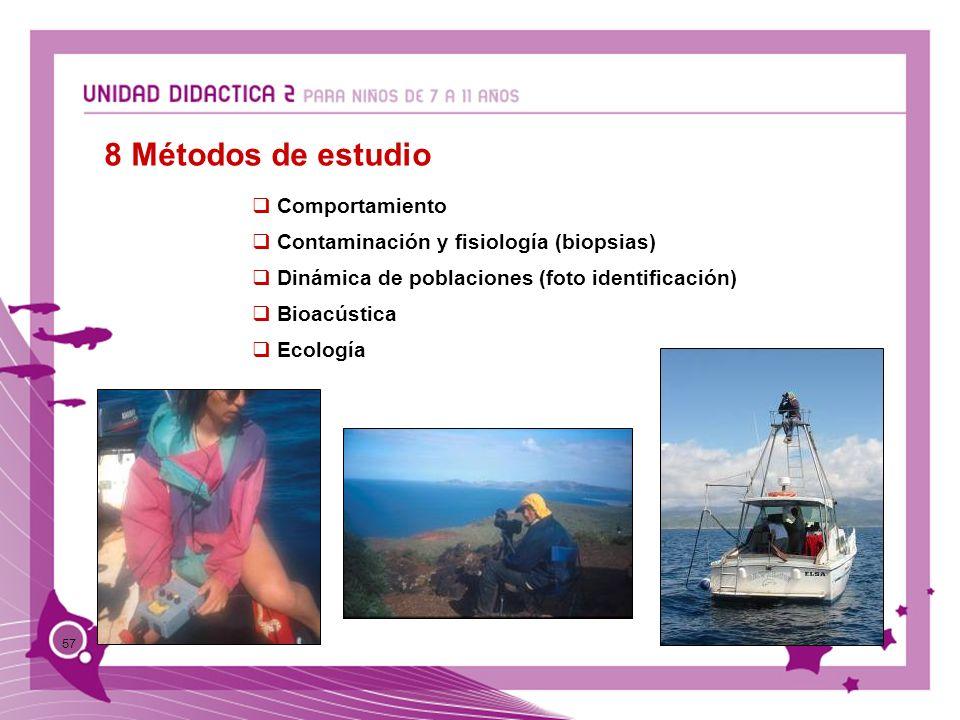 57 8 Métodos de estudio Comportamiento Contaminación y fisiología (biopsias) Dinámica de poblaciones (foto identificación) Bioacústica Ecología
