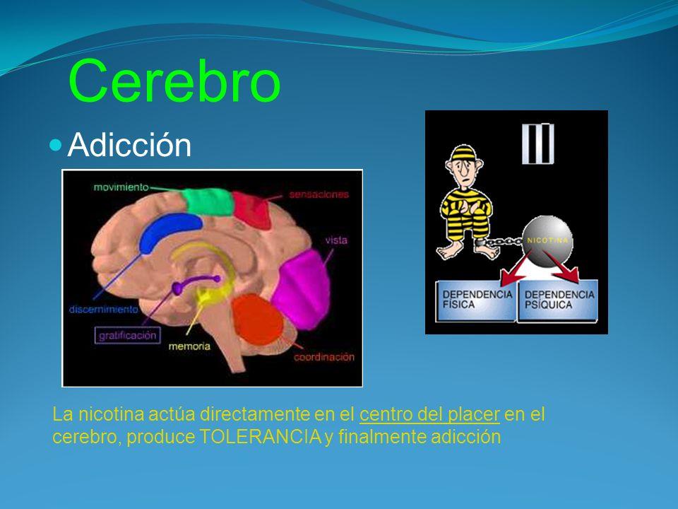 Cerebro Adicción La nicotina actúa directamente en el centro del placer en el cerebro, produce TOLERANCIA y finalmente adicción