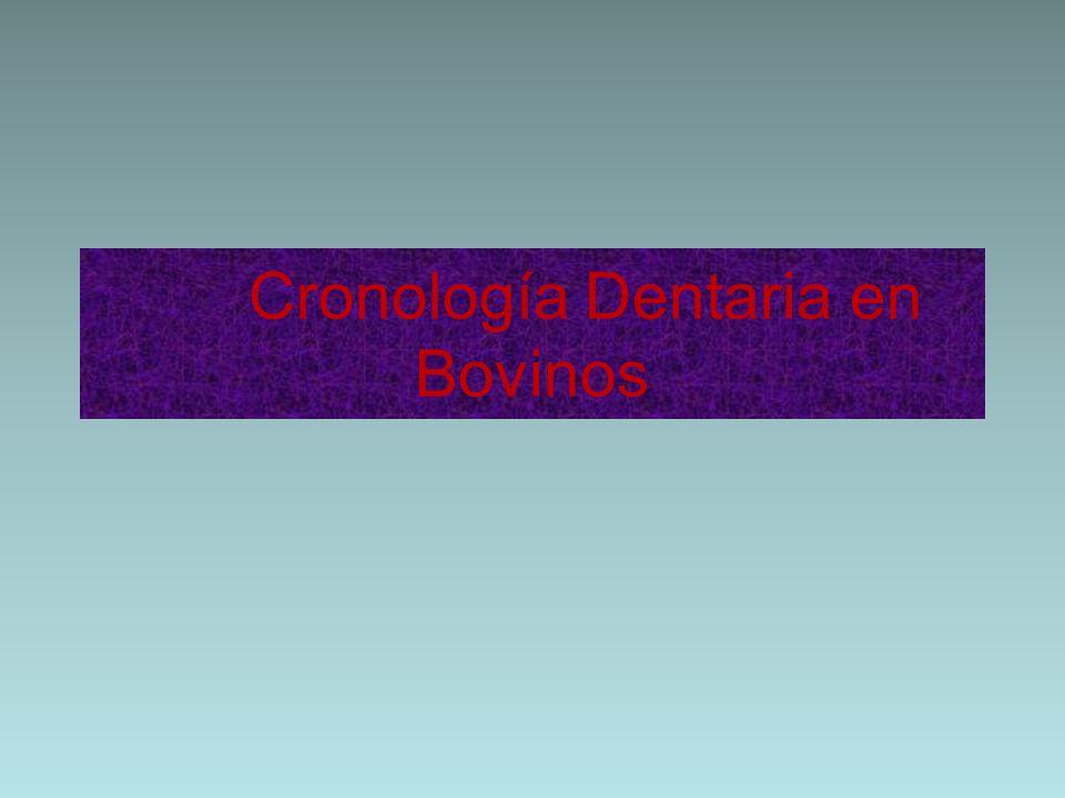 Cronología Dentaria en Bovinos