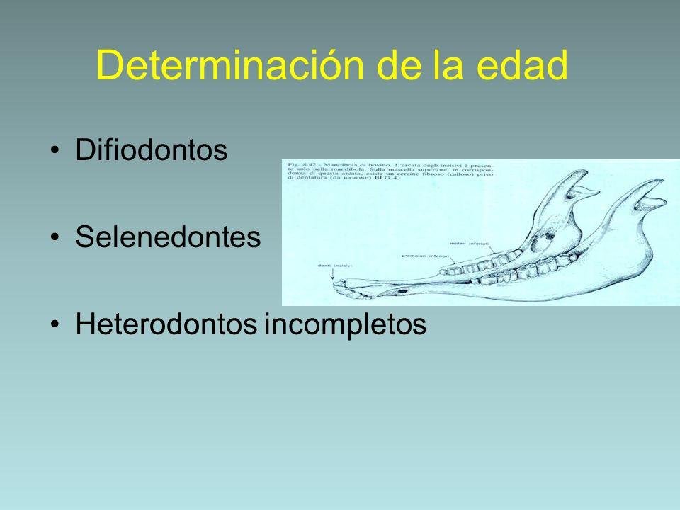 Determinación de la edad Difiodontos Selenedontes Heterodontos incompletos