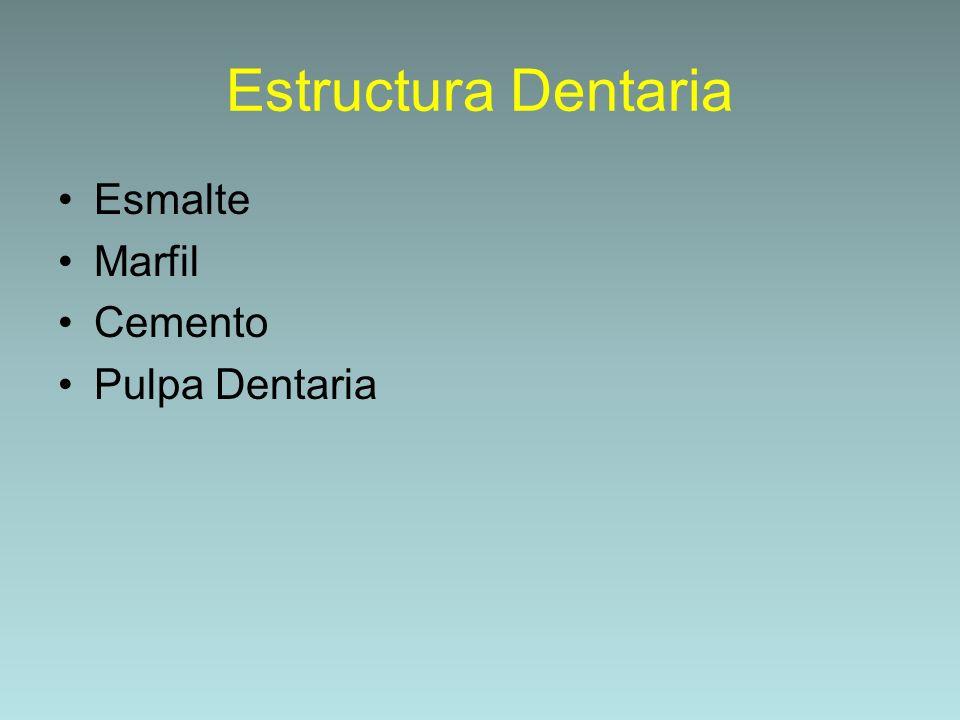 Estructura Dentaria Esmalte Marfil Cemento Pulpa Dentaria