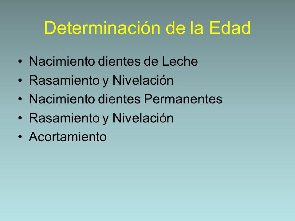 Determinación de la Edad Nacimiento dientes de Leche Rasamiento y Nivelación Nacimiento dientes Permanentes Rasamiento y Nivelación Acortamiento