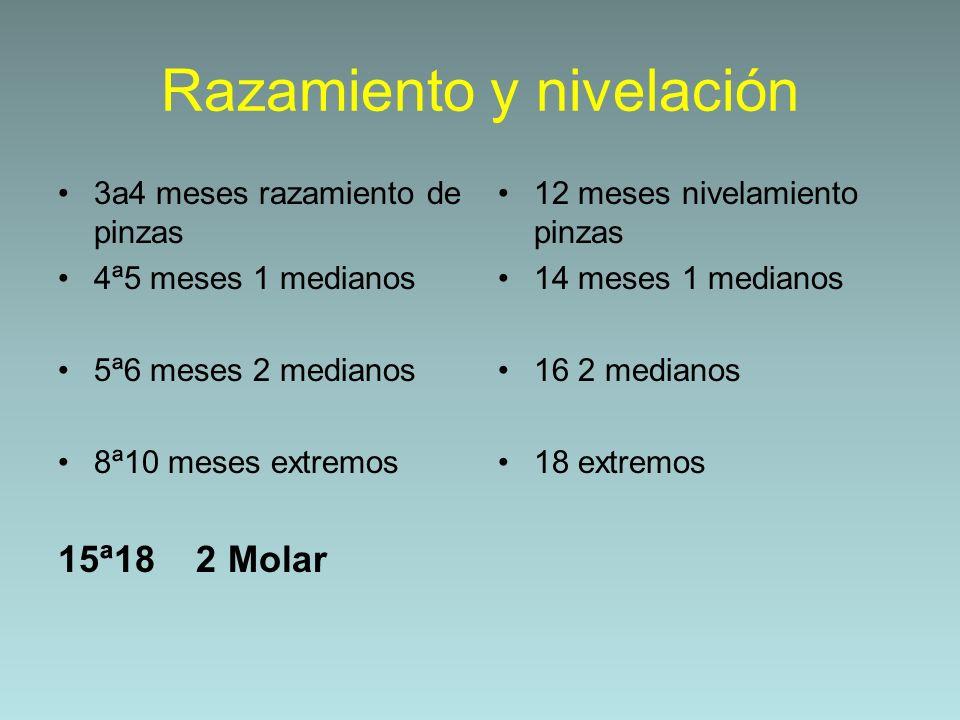 Razamiento y nivelación 3a4 meses razamiento de pinzas 4ª5 meses 1 medianos 5ª6 meses 2 medianos 8ª10 meses extremos 15ª18 2 Molar 12 meses nivelamien