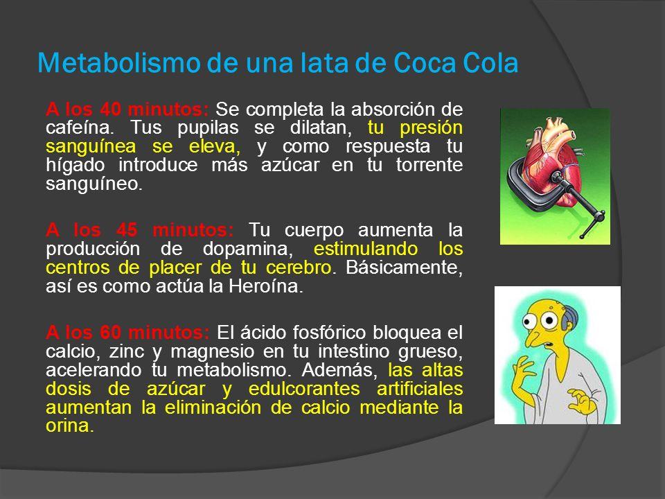 Metabolismo de una lata de Coca Cola A los 40 minutos: Se completa la absorción de cafeína.