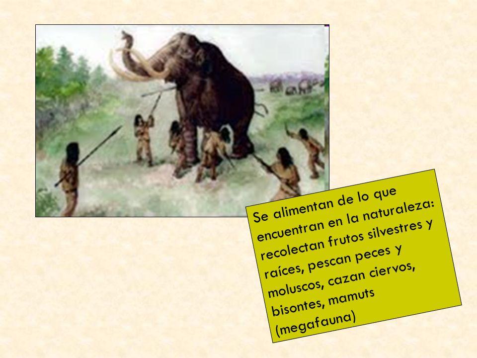 Se alimentan de lo que encuentran en la naturaleza: recolectan frutos silvestres y raíces, pescan peces y moluscos, cazan ciervos, bisontes, mamuts (m