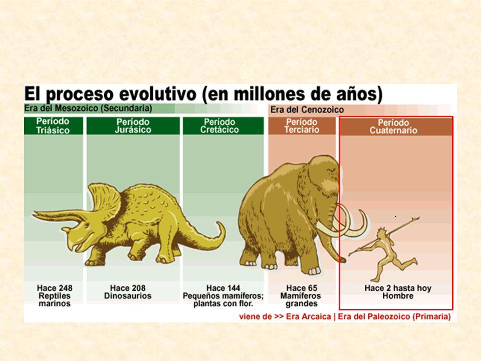 El proceso de Hominización Llamamos hominización al proceso de cambios o evolución que han sufridos los homínidos hasta dar lugar a la estructura del hombre actual.