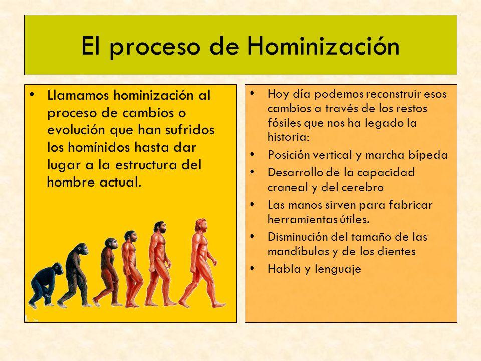 El proceso de Hominización Llamamos hominización al proceso de cambios o evolución que han sufridos los homínidos hasta dar lugar a la estructura del