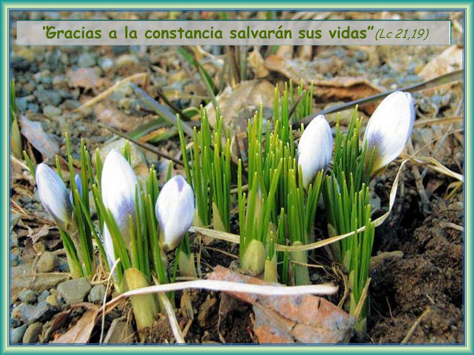 Las segundas, en cambio, reciben la invitación, como un buen terreno recibe la semilla.